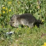 Camping les Chataigniers-arcizans avant - argelès gazost - Marmotte-min