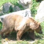 Camping les Chataigniers-arcizans avant - argelès gazost - Ours