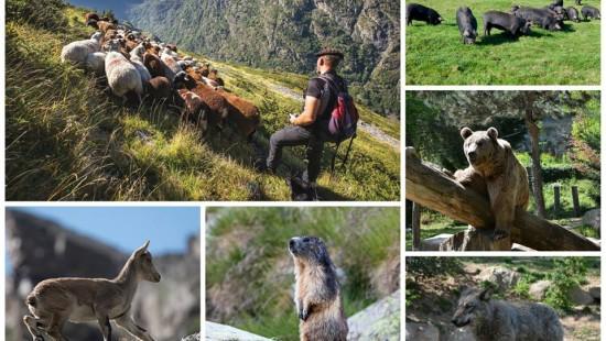 Camping les chataigniers - faune des Pyrénées